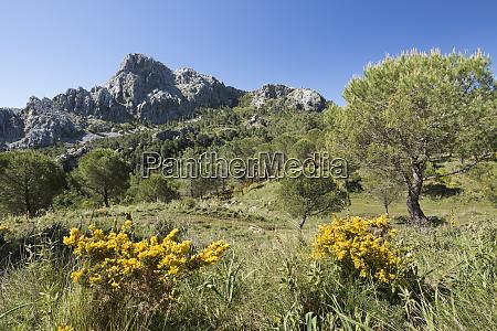 rugged mountain scenery in spring near