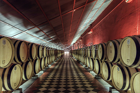 wine barrels in the cellars of