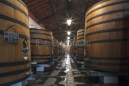 wine barrels storing award winning portuguese