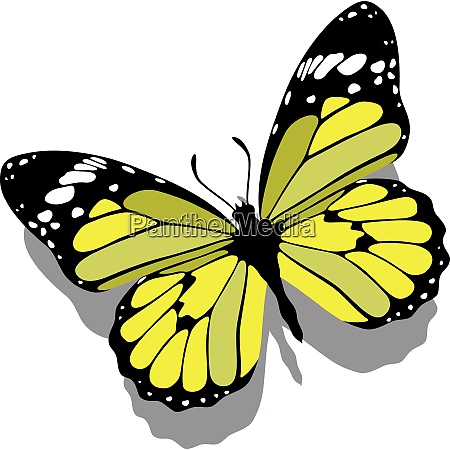 vector butterfly on paper 09