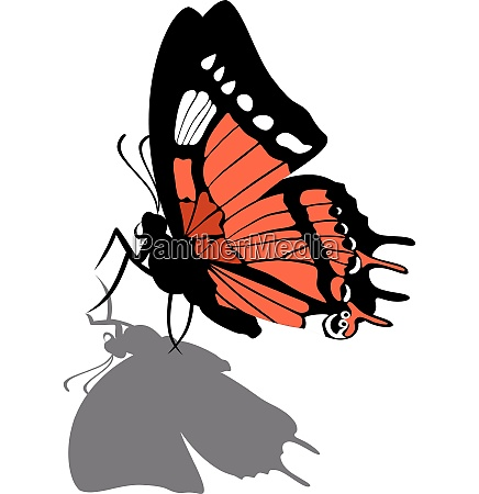 vector butterfly on paper 08