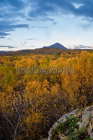 colourful trees at lake myvatn in