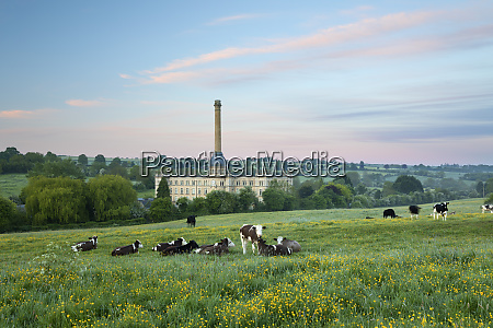 bliss mill at dawn with cows