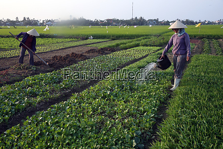 a farmer waters her vegetable farm