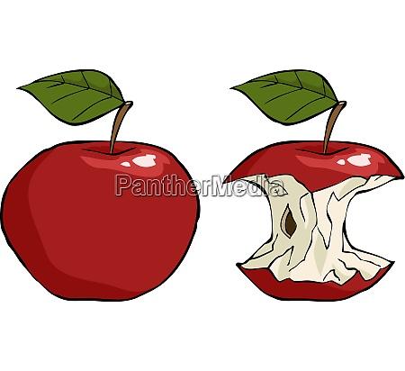 apple and apple core cartoon vector