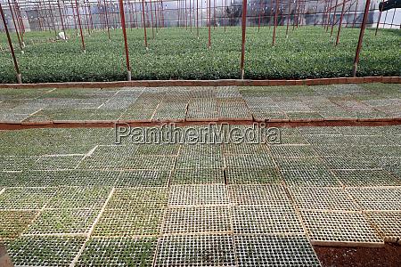 vegetable farm greenhouse dalat vietnam indochina