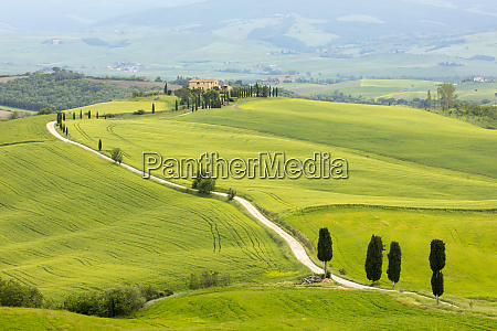cypress trees and green fields at