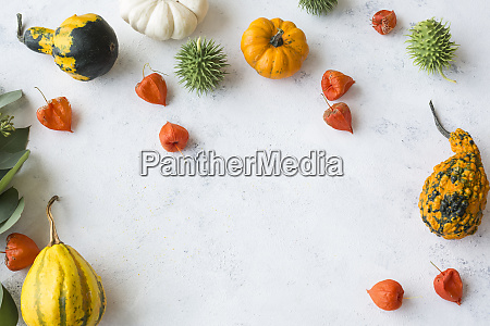 autumnal decoration ornamental pumpkins