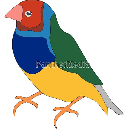 bird parrot in color 01