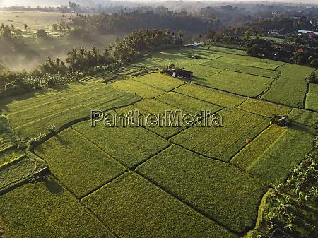 indonesia bali ubud aerial view of