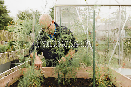senior man digging soil in allotment