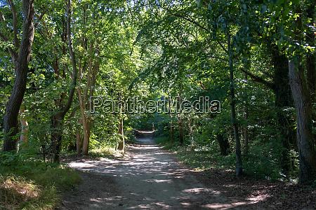 a dark forest path