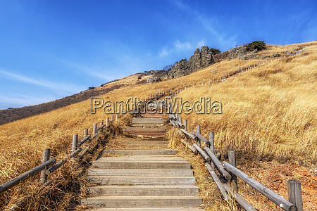 ganwoljae trails with reeds