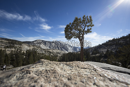 usa california yosemite national park tree