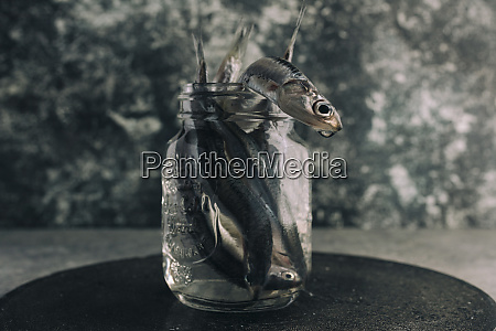 fresh anchovies in jar with water