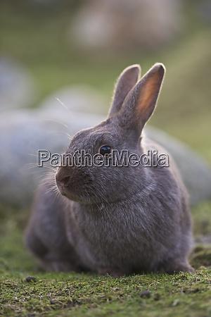 bunny portrait on grass