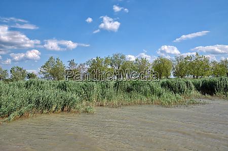 reed belt at lake neusiedler see