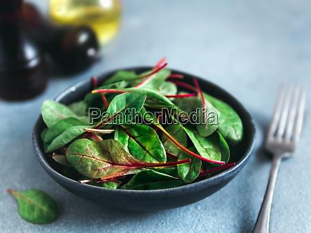 fresh salad of green chard leaves