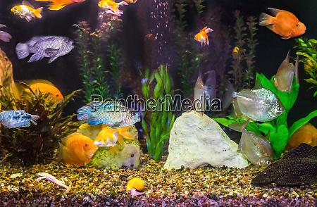 close up of aquarium tank full