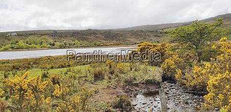 waterside scenery in connemara