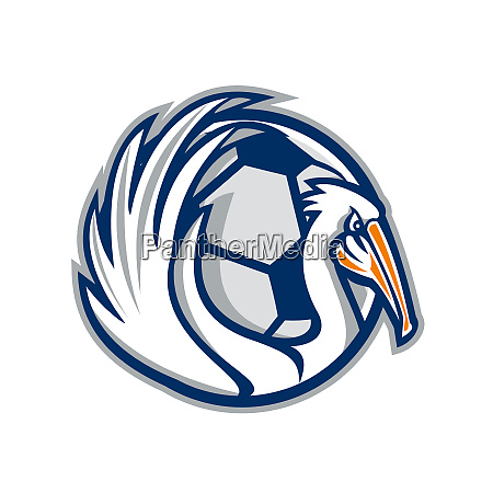 pelican wings soccer retro