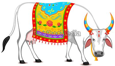 india holy pongal ox holy spirituality