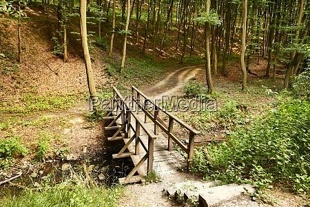 forest path bridge crossing stream