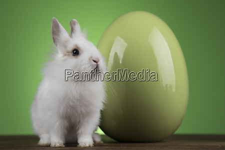 bunny with easter eggs on green