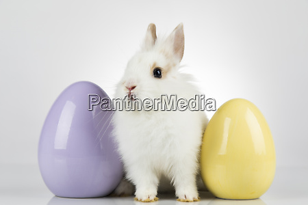 little baby rabbit and easter eggs