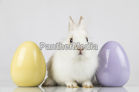 easter animal holiday and eggs white