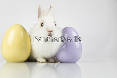 rabbit bunny and easter egg and