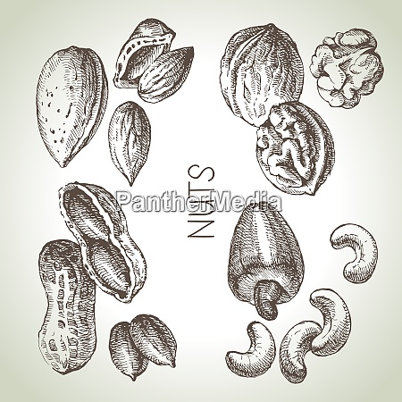 hand drawn sketch nuts set vector