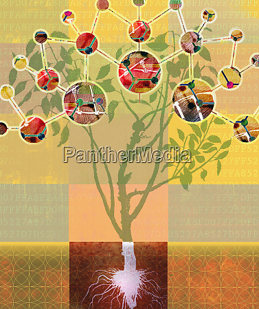 analysing molecular structure of plant