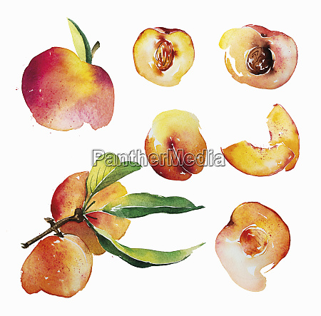 watercolour painting of fresh peaches