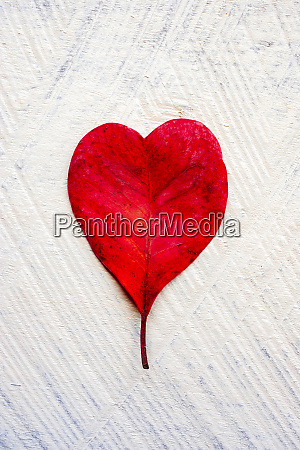 red heart shaped leaf