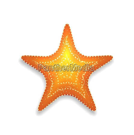 illustration orange starfish with shadow isolated