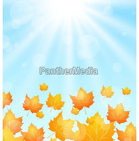 illustration autumn flying maples in blue