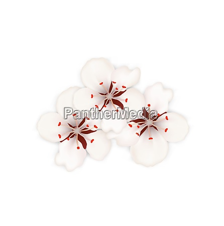 illustration spring background with cherry blossom