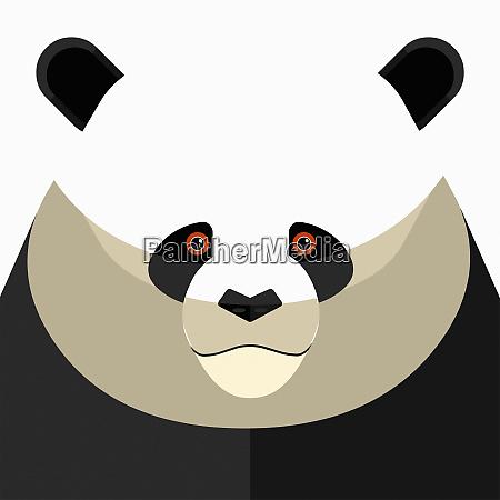close up of pandas face looking