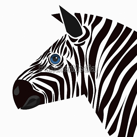 close up of zebra looking at