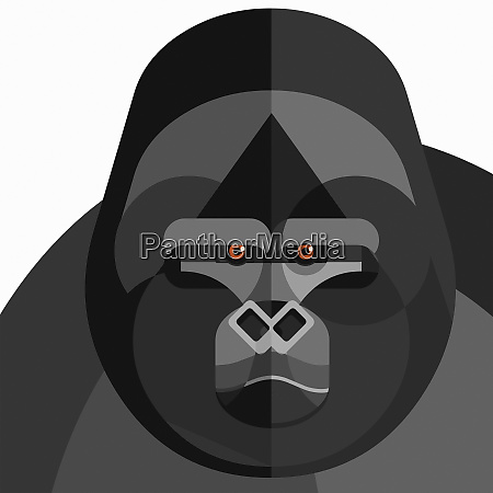 close up of gorillas face looking