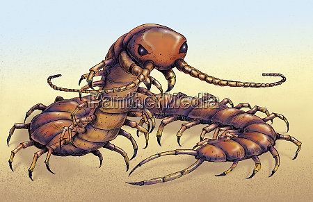 illustration of chinese red headed centipede