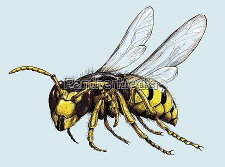 illustration of wasp in flight