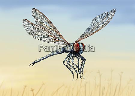 illustration of extinct meganeura insect