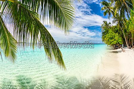 tropical paradise beach white sand and