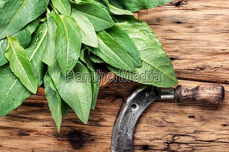 bundle of fresh spinach