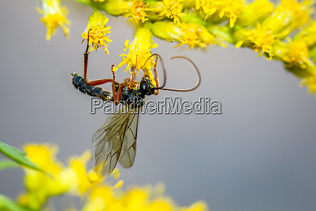a bee wasp insect on a