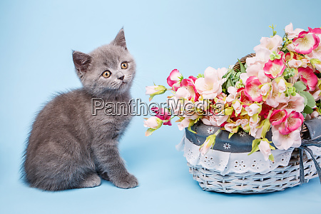 kitty and flowers on a light