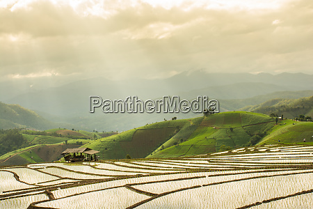 terraced rice field nature landscape