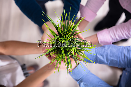 businesspeople holding green plant